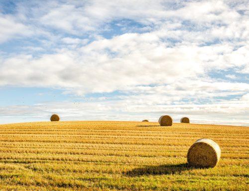 Состояние и перспективы развития сельского хозяйства в Оренбуржье