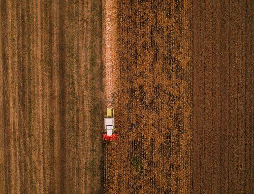 Обзор рынка зерновых культур