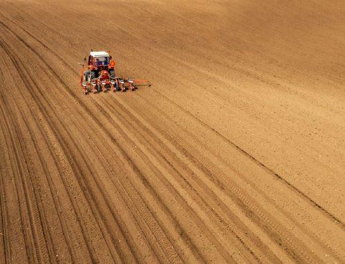 Как правильно подготовить землю к посеву?